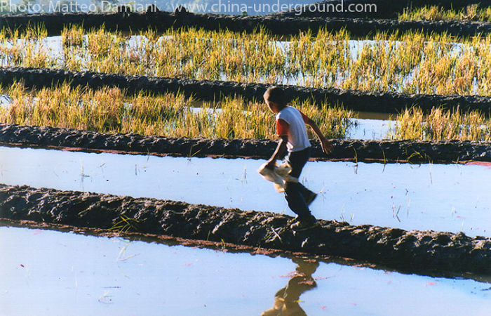 Spectacular Rice-paddy Terracing In China