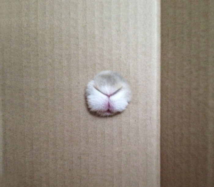 Who's Hiding Behind The Box?