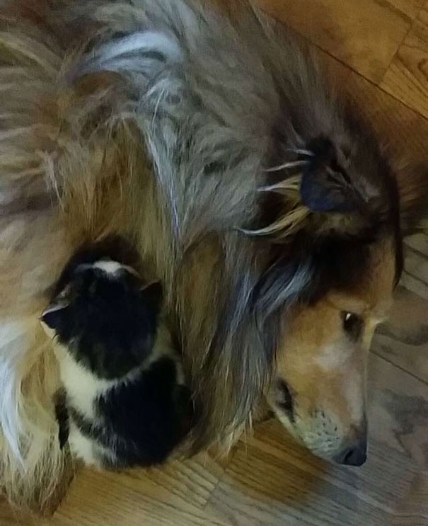 cat-dog-best-friends-molly-moses-11a