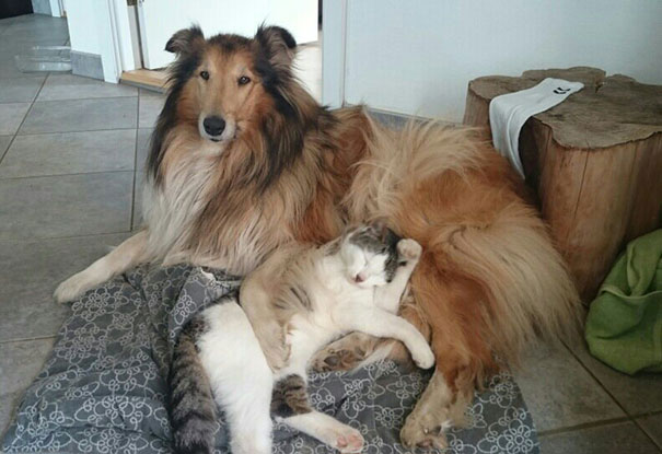 cat-dog-best-friends-molly-moses-5a