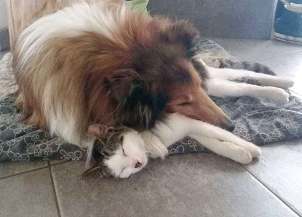 cat-dog-best-friends-molly-moses-9a