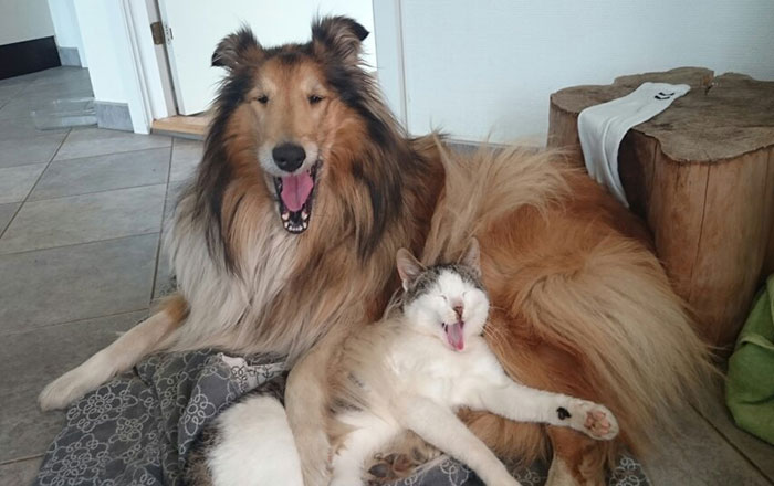 Cat And Dog Sleep Together From The Very First Day They Met