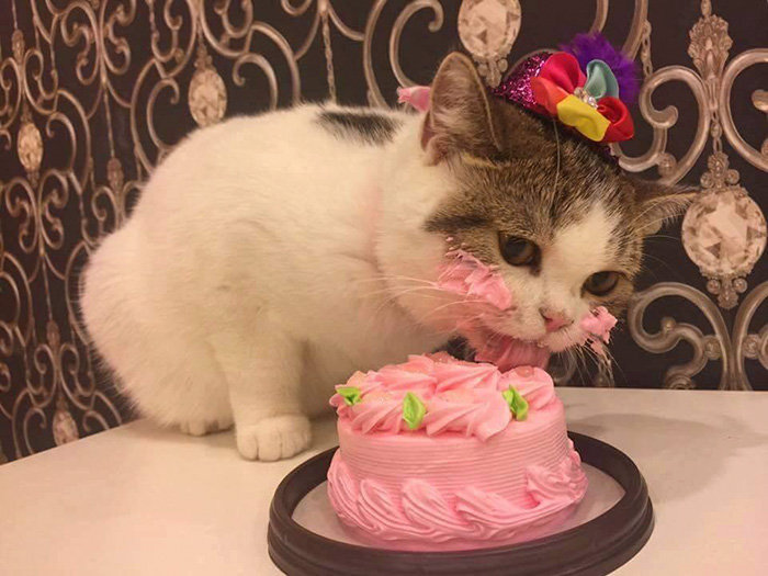 Tremendous This Cat Eating A Cake On His Birthday Is Hilariously Adorable Personalised Birthday Cards Arneslily Jamesorg