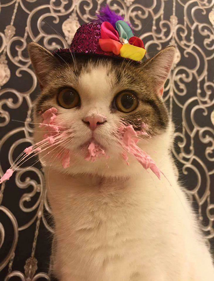 Marvelous This Cat Eating A Cake On His Birthday Is Hilariously Adorable Funny Birthday Cards Online Elaedamsfinfo