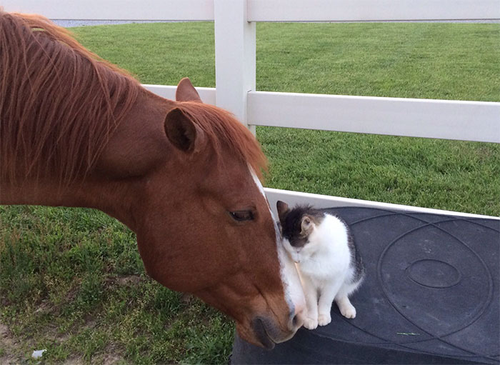 Tiny Cat Has Been Best Friends With His Horse Since He Was A Kitten