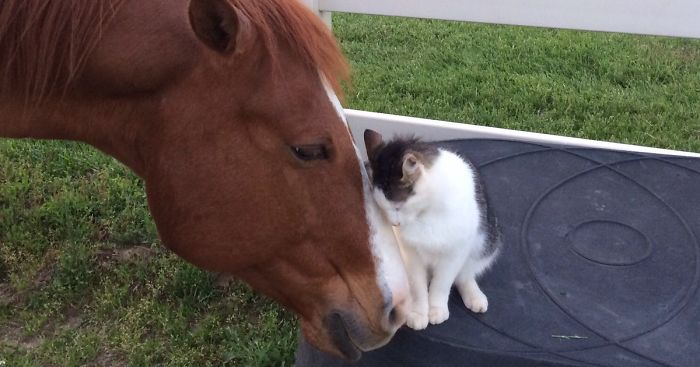 Tiny Cat Has Been Best Friends With His Horse Since He Was