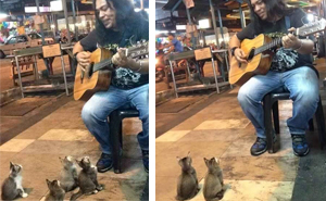 4 Music-Loving Kitties Come To Listen To Street Singer Everyone Else Ignored