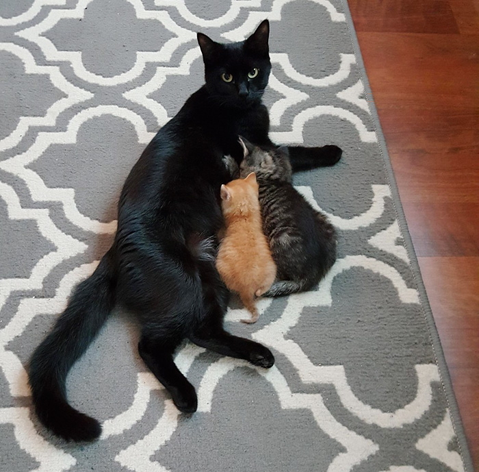 cop-rescues-kitten-donut-operator-2