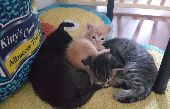 cop-rescues-kitten-donut-operator-3