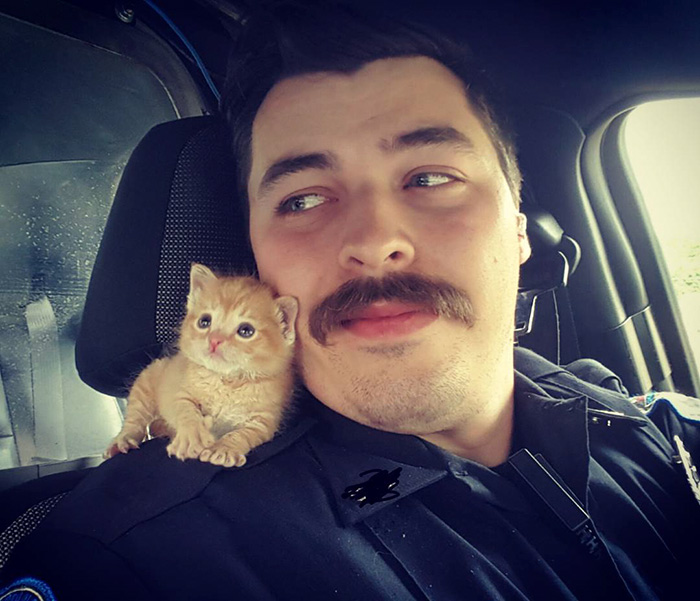 cop-rescues-kitten-donut-operator-5