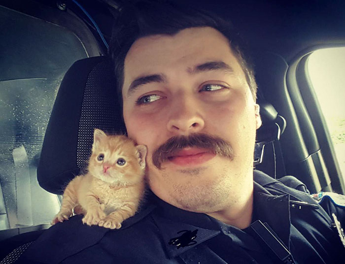 Cop Rescues Kitten Left In The Rain And Now They're Fighting Crimes Together