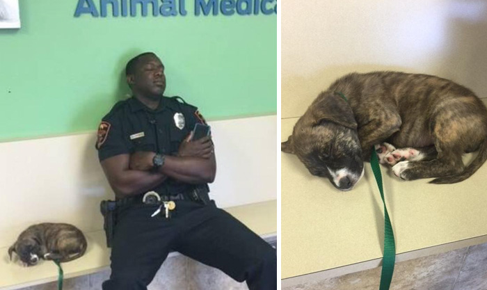 Cop Finds Stray Puppy, Stays With Her After His Night Shift To Make Sure She's Safe