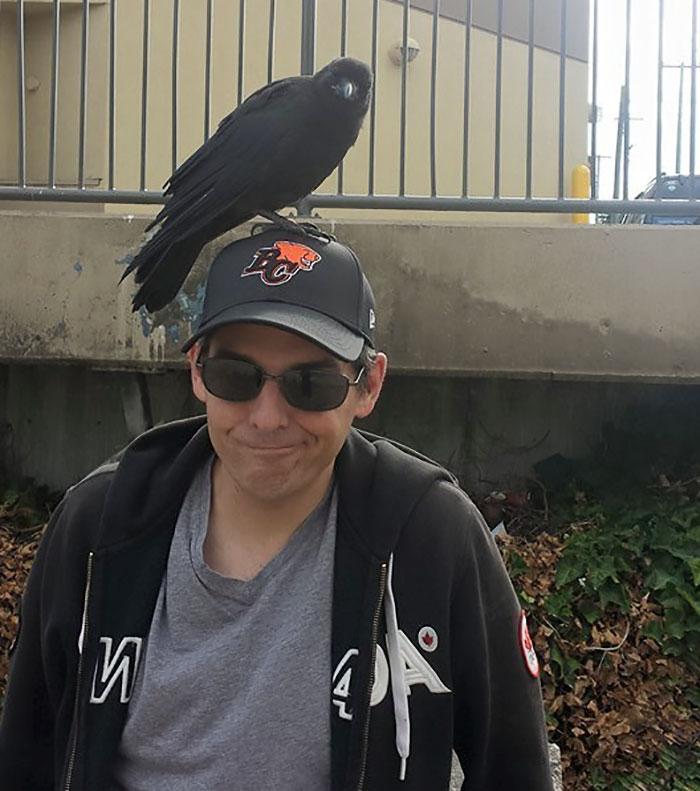 crow-befriends-man-canuck-1