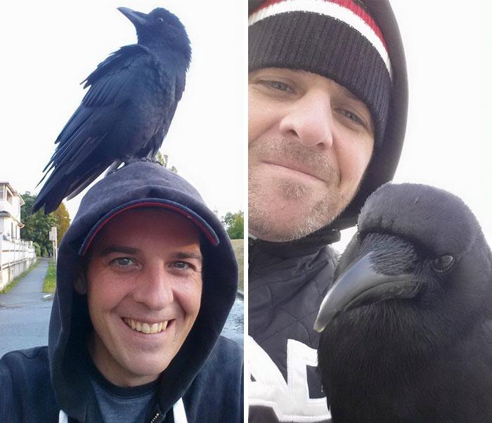 crow-befriends-man-canuck-33