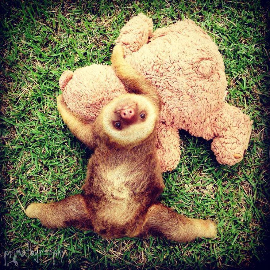 cute-baby-sloth-institute-costa-rica-sam-trull-27
