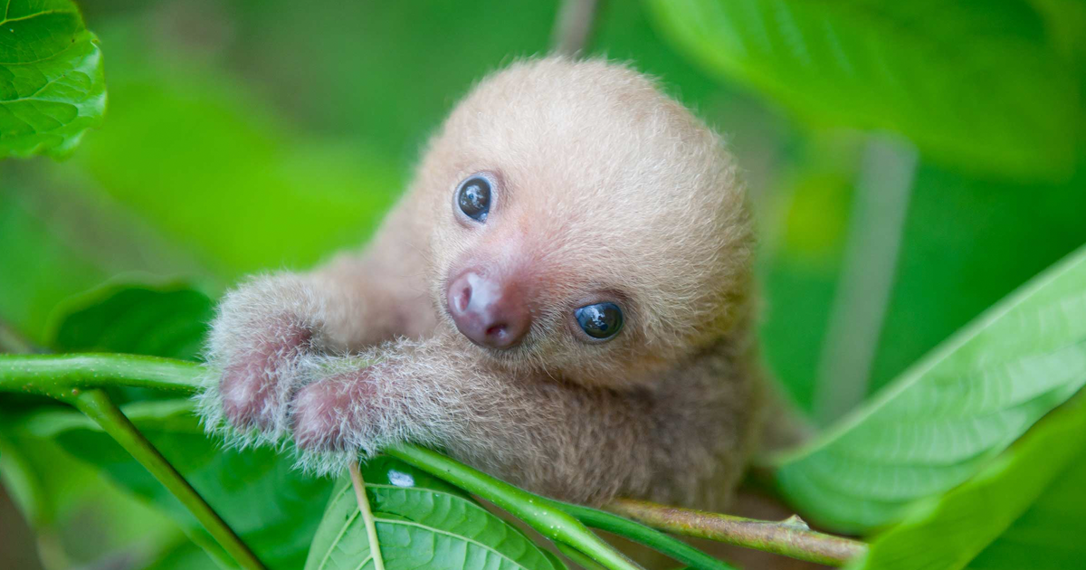 Baby Animals That Are To Cute To Handdle - Magazine cover