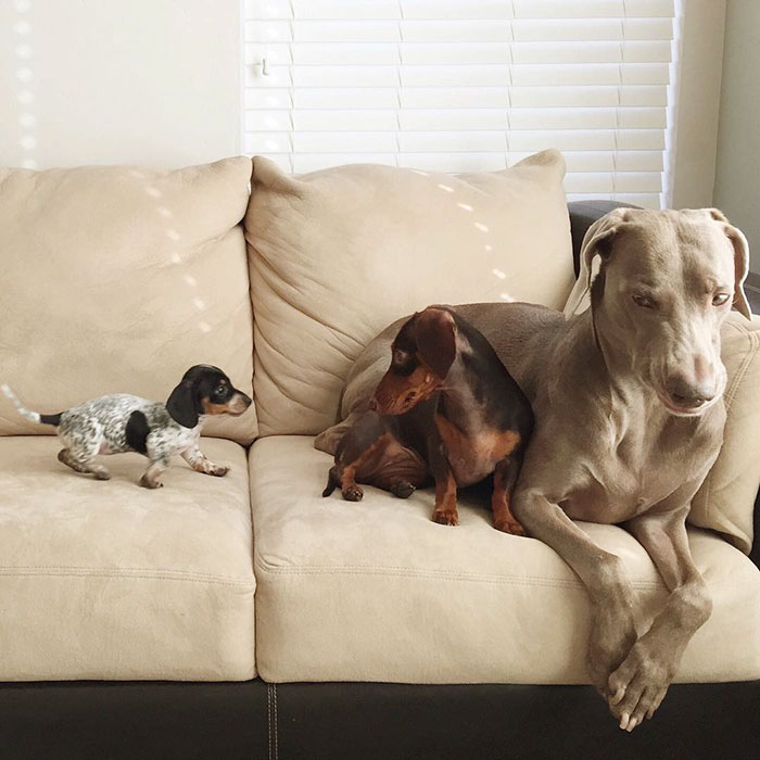 cute-dogs-sleep-together-best-friends-harlow-sage-indiana-reese-58