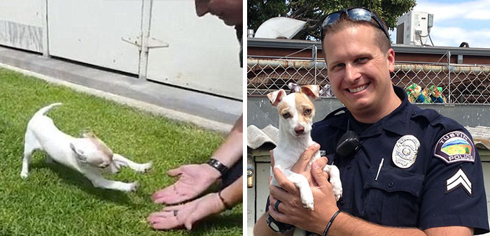 Drug Addict Puppy Reunites With The Officer Who Saved His Life