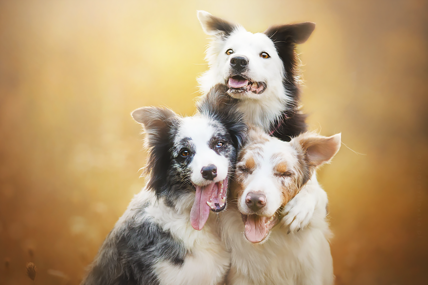 dog-photography-alicja-zmyslowska-2-15