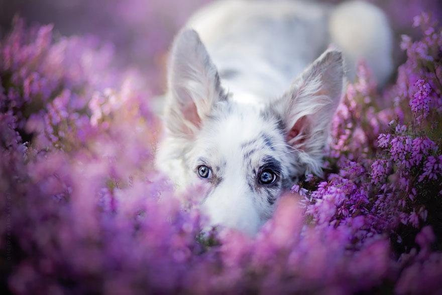 As 12 fotos mais bonitas de cachorros feitas por uma artista polonesa