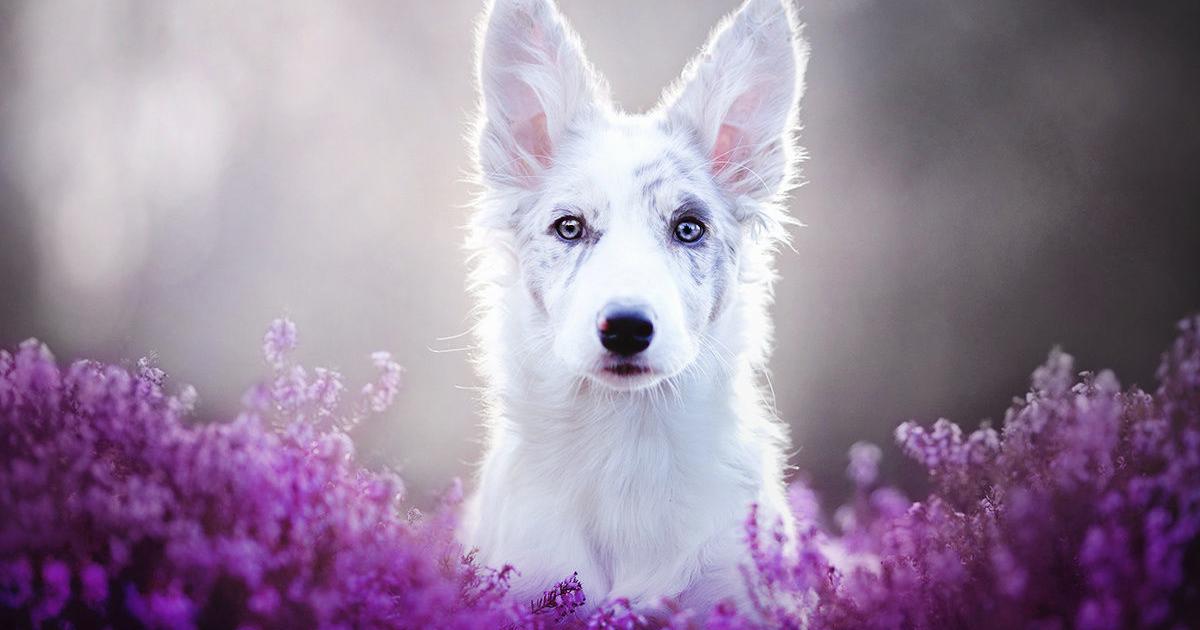 This Polish Photographer Takes The Most Beautiful Dog Photos Ever 13 Pics Bored Panda
