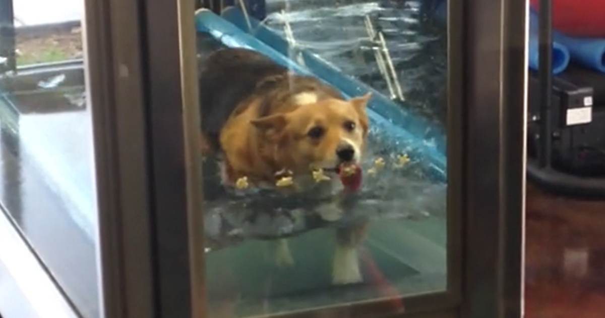This Dog Didn't Want To Exercise, So They Came Up With A Genius Plan