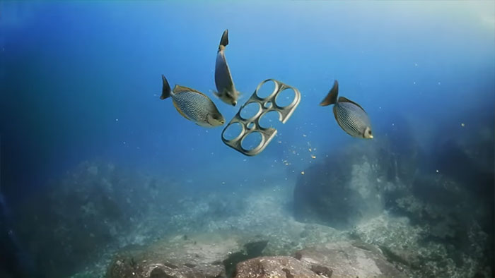 edible-six-pack-beer-rings-safe-for-marine-life-saltwater-brewery-6