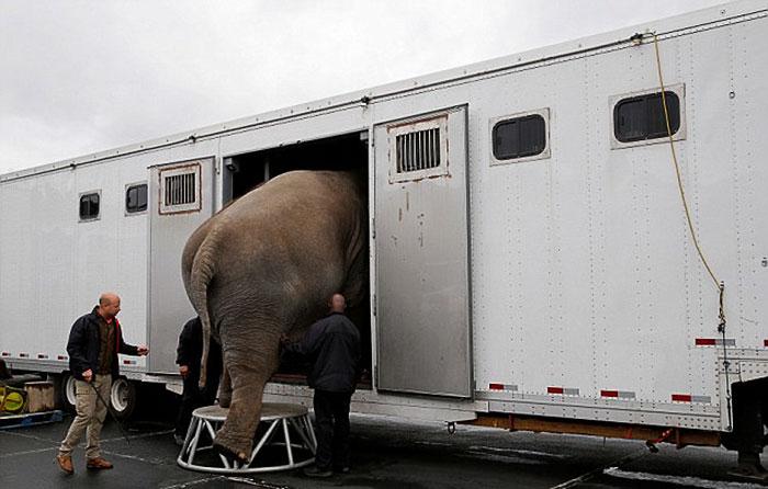 elephant-circus-ringling-bros-last-show-1
