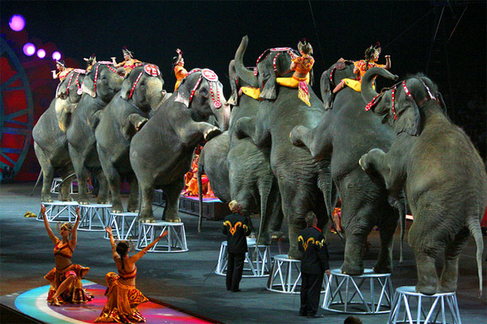 elephant-circus-ringling-bros-last-show-13
