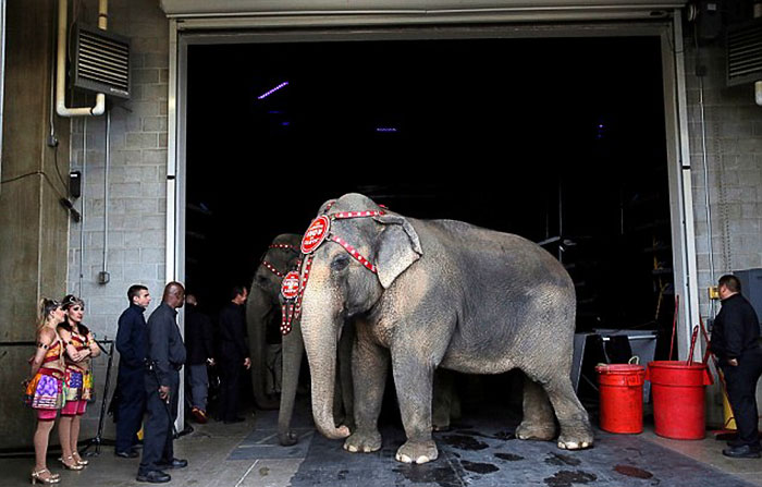 elephant-circus-ringling-bros-last-show-3
