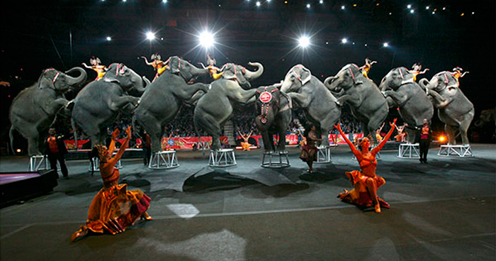 elephant-circus-ringling-bros-last-show-8