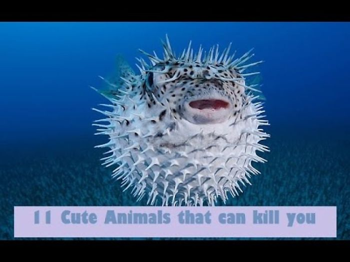 11 Cute Animals That Can Kill You | You Will Not Believe These Cute Animals Are Dangerous