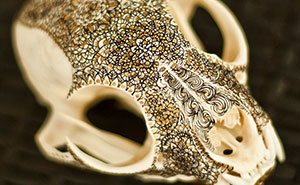 I Decorate Skulls With Golden Mandalas To Honour Fallen Creatures
