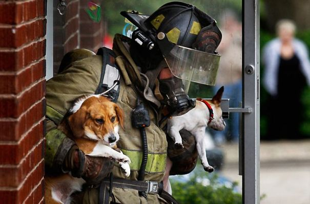 Firefighter Andy Bell Rescues Two Pups From An Apartment Fire In Jacksonville