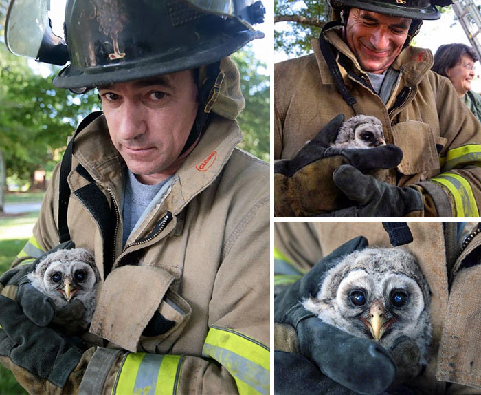 Orphaned Baby Owl Rescued