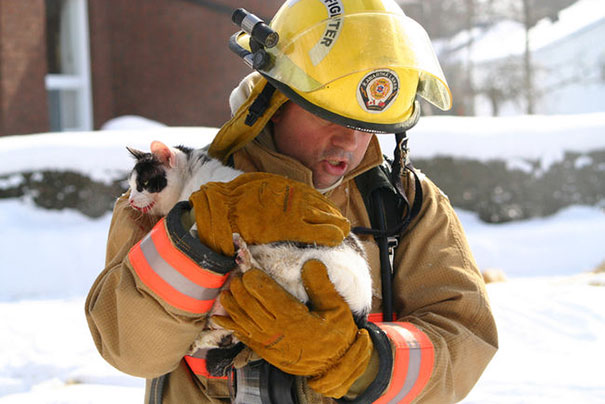 A Firefighter Saves The Cat