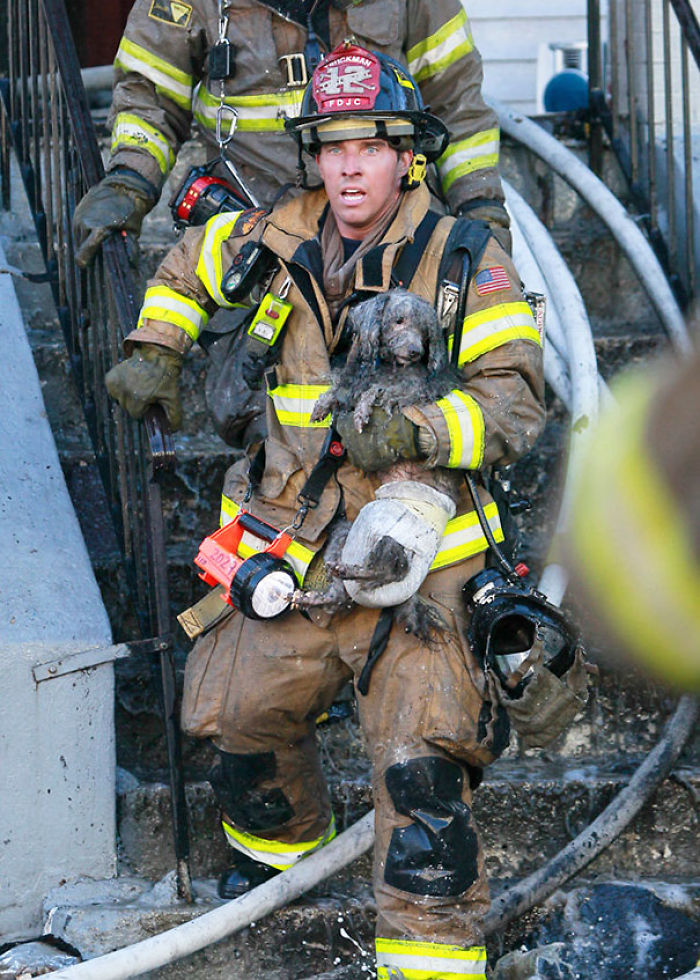 Firefighter Ray Spellmyer Carries A Poodle Named Joseph Out Of A Burned Out Building.