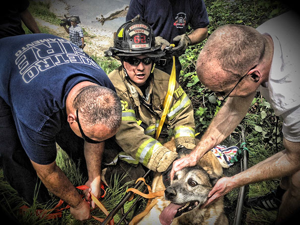 Firefighters Rescued Bandit The Dog From The Hillside