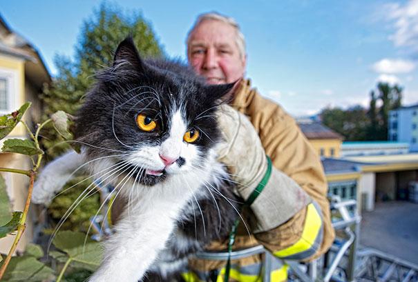 Firefighter Cat Rescue, Firefighter Squad Klagenfurt