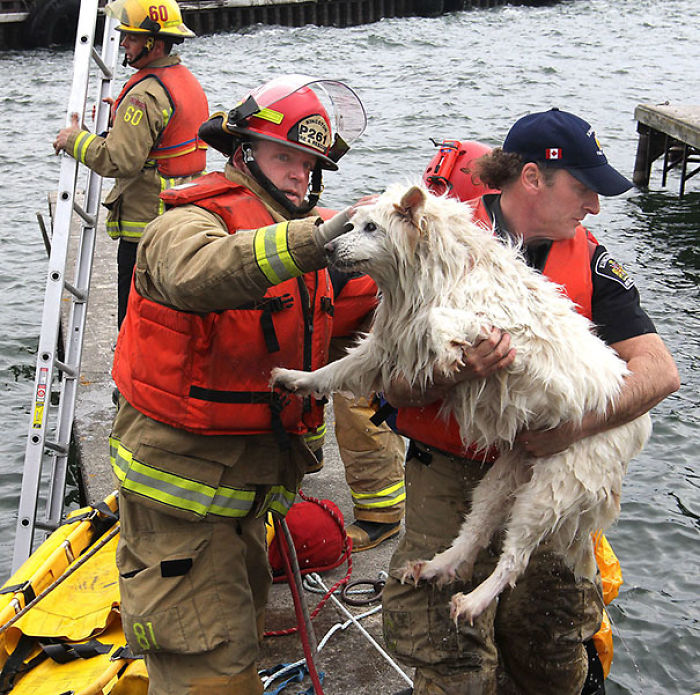 Blind Dog Being Rescued From The Cold Water Of Lake Ontario