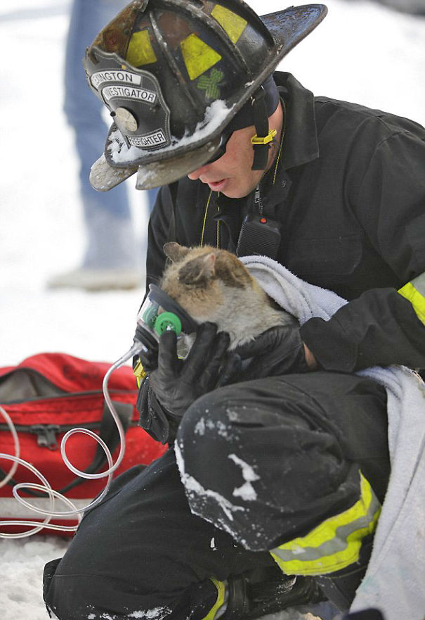 Firefighter Administers Oxygen To Prissy The Cat After The House Fire