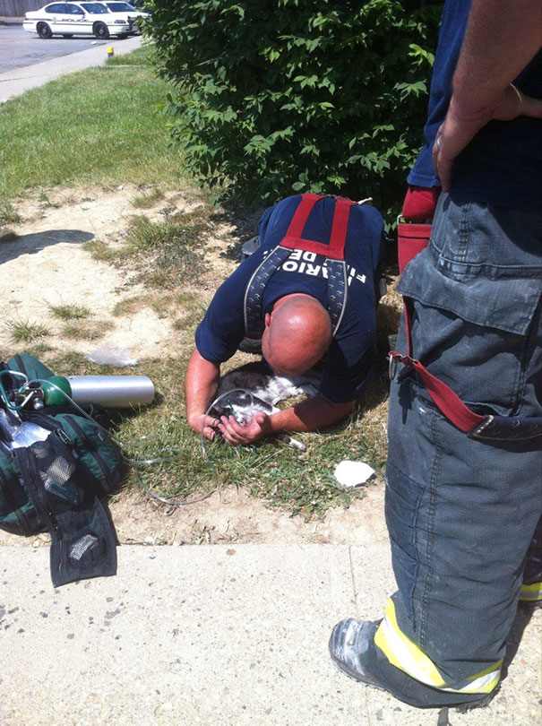 Here Is A Firefighter Saving One Of My Mentally Challenged Neighbor's Cats