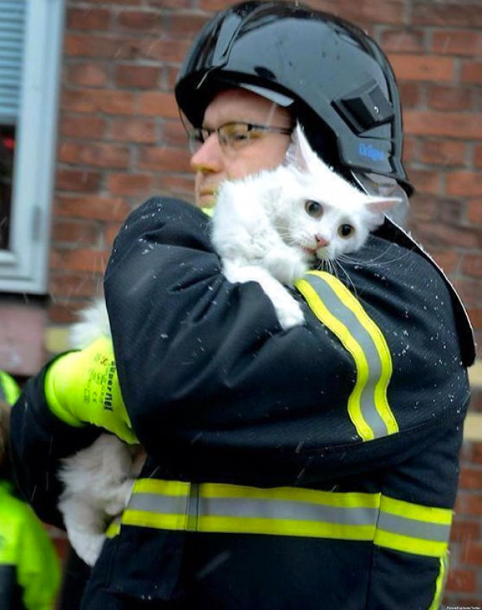 Firefighter In Denmark Rescues A Cat From A Burning House