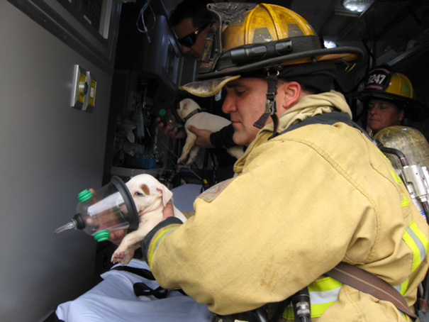 Ft. Lauderdale Firefighters Giving Puppies Oxygen After A Housefire