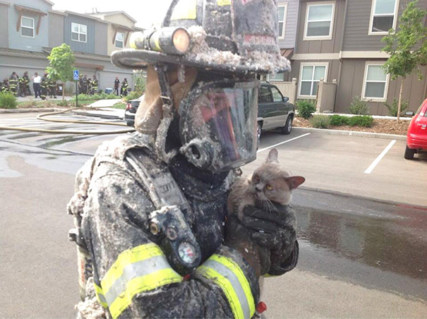 Firefighter Saves Cat From Condo Fire Today. Cat Was Not Impressed