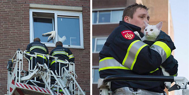 Cat Stuck In Window Is Saved By Firefighters