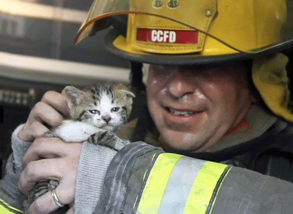 Corpus Christi Fire Department Captain John Leahey Examines One Of Two Cats Rescued From A Duplex Fire