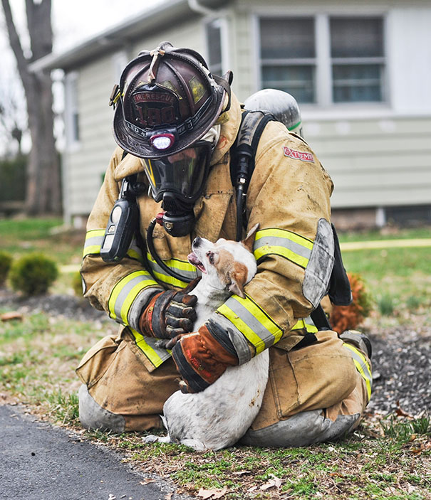 Firefighter Scott Dawson Kneels Down With Finn, A Chihuahua Mix, After Pulling Him Out Of A House Fire In Bloomsburg