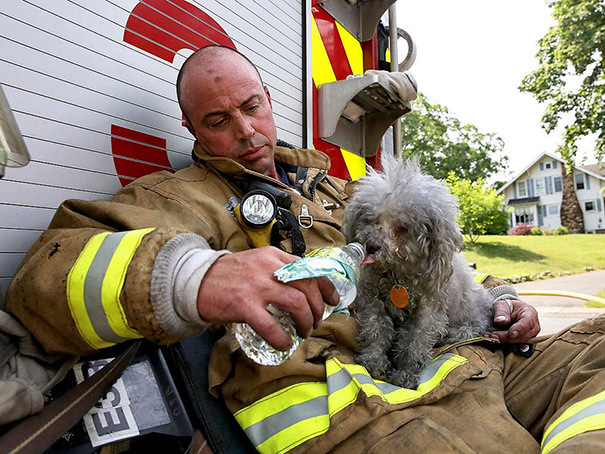 Firefighter With The Dog He Rescued From A Burning Home In Connecticut Last Friday