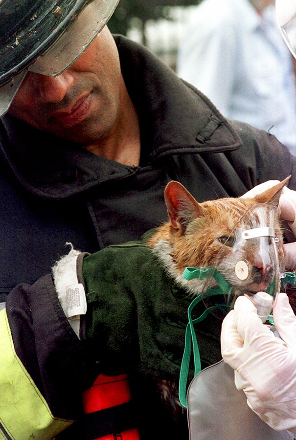 Firefighters Found Coocoo The Cat On The First Floor Of A Boston Building After Putting Out A Fire. Here Firefighter Raymond Alicea Administers Oxygen To The Cat